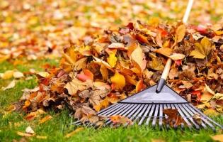 Ramassage des feuilles - Accès 27